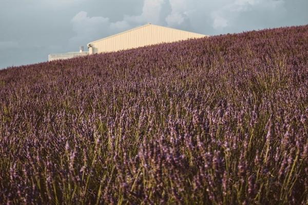 Provence, France Romantic Train Journeys