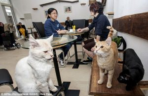 crazy cat cafe near train stations in italy