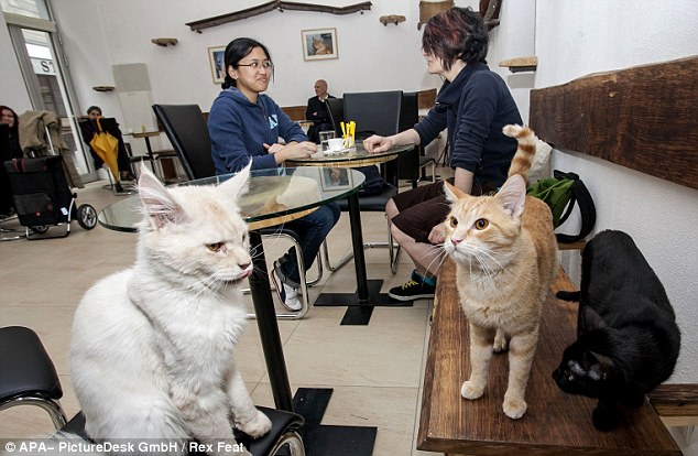 Crazy Cat café nær togstationen i Italien