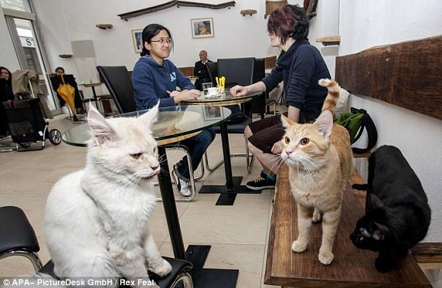 Irikuri Cat kofi itaja sunmọ reluwe ibudo ni Italy