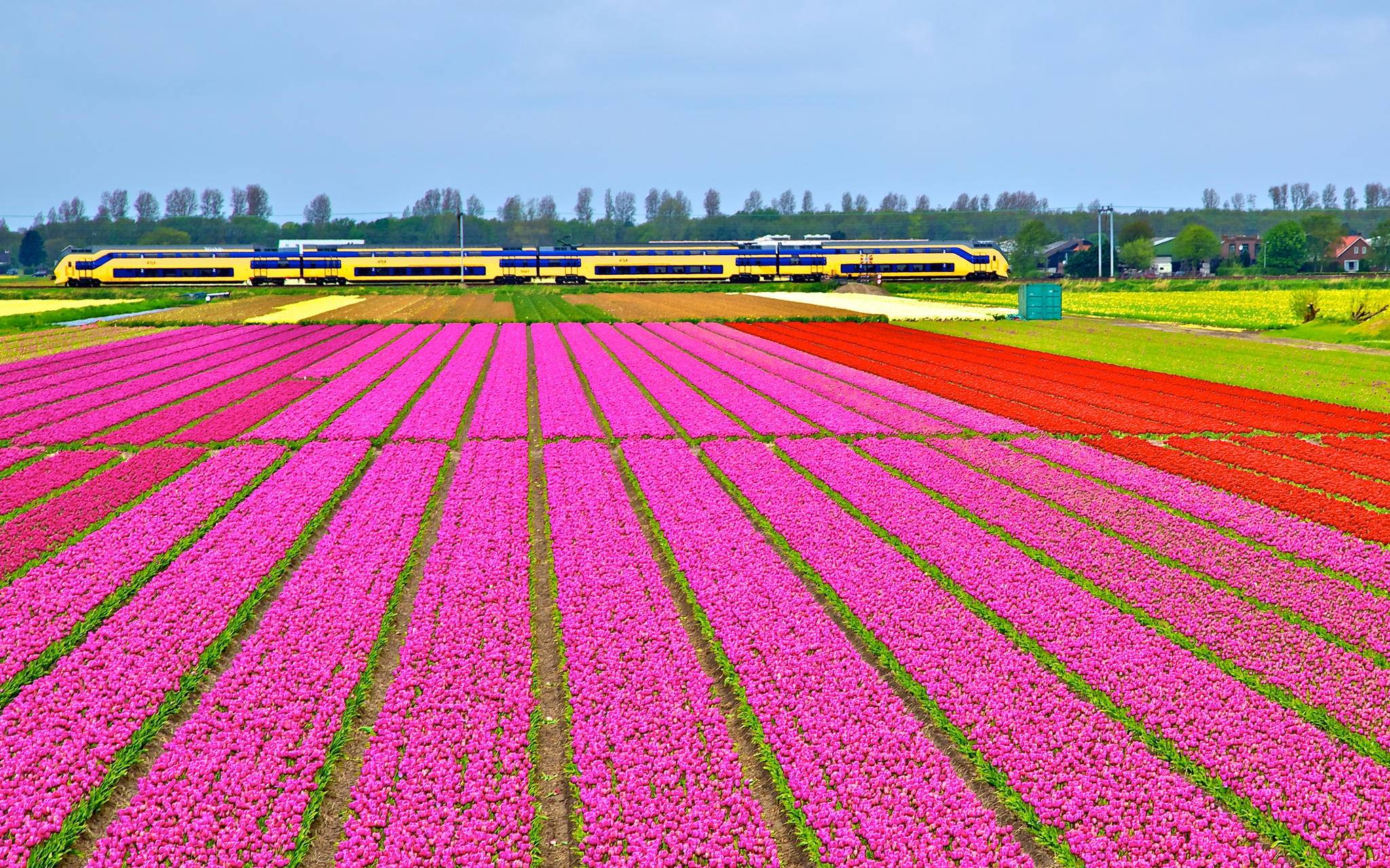 Holland Tulip Season dhe tren NS