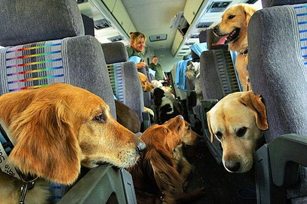 many dogs traveling