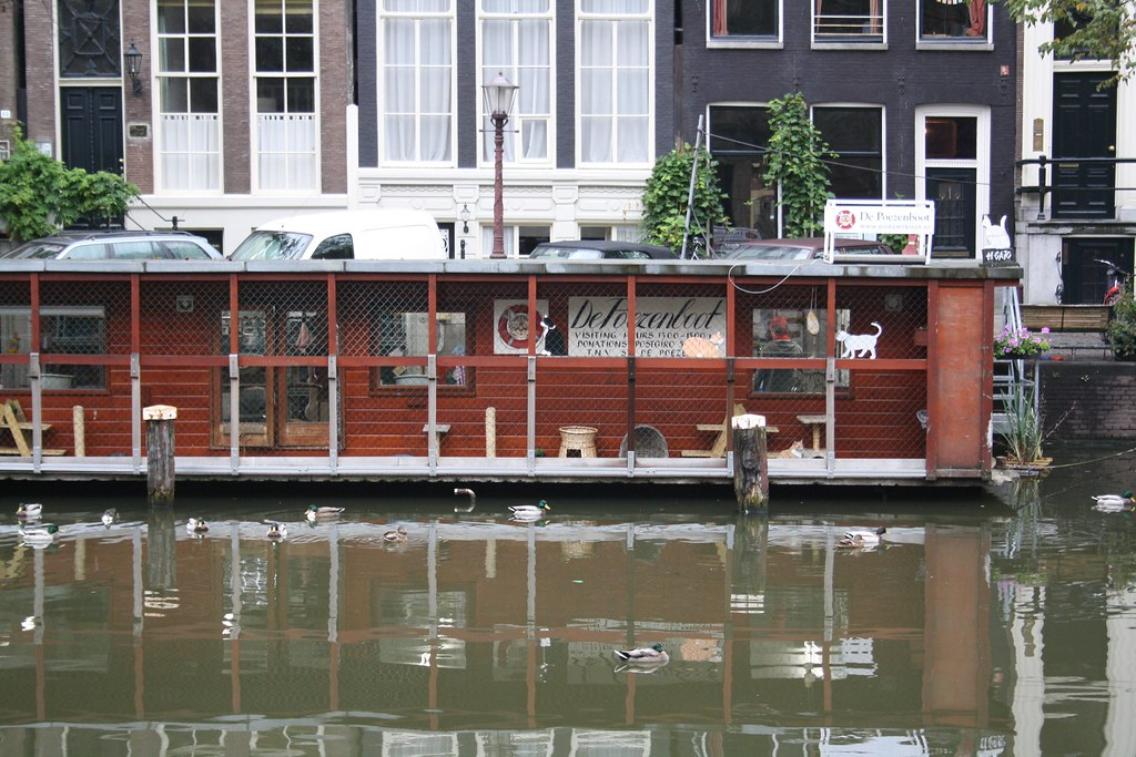 Unique things to do in Amsterdam - Cat boat