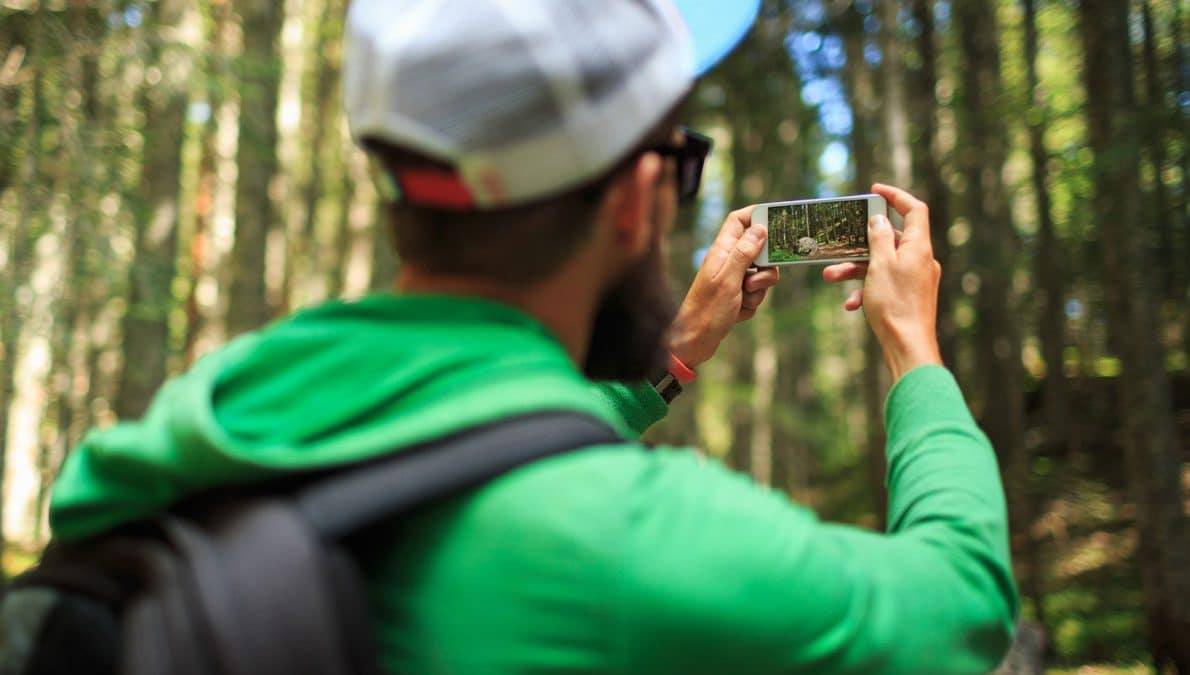 फोटो लेने के एक जंगल